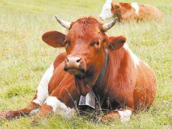 Производство отечественного молока идет на спад