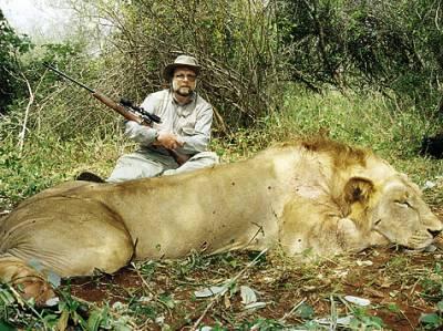 Мой первый добытый африканский лев