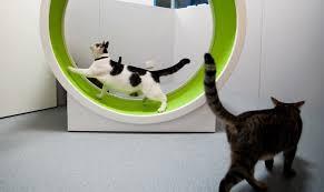 корм для кошек пронатюр