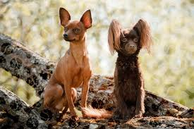 Особенности ухода и содержания собаки
