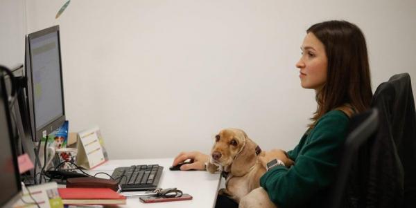 На работу с собакой: как выглядит pet-friendly-офис в Москве